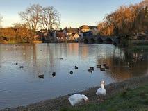 Fordingbridge at sunrise. Fordingbridge over the River Avon at sunrise Royalty Free Stock Photos