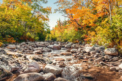 Foreat stream in the fall Royalty Free Stock Photo