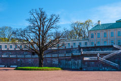 Forecourt of the palace with big tree. Lomonosov, Leningrad Oblast, Russia - May 10, 2015: Forecourt of Bolshoy (Menshikovskiy) palace. Located in Oranienbaum Stock Image