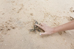 Forefinger stop crab Royalty Free Stock Photo