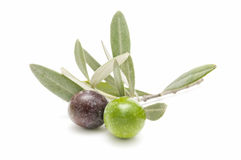 Forefront of olives Stock Photo