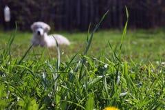 Foreg frais de plan rapproché de lames d'herbe de Beautifulgreen et d'herbe de pré Image libre de droits