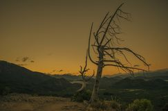 In the foreground a dry tree in the background you see a lake among the mountains while it dawns. After sunset you see a dry tree and in the distance a lake stock photos