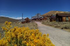 In the foreground are flowers, in the background a blurred Ghost Town, Bodie, California.  royalty free stock photography