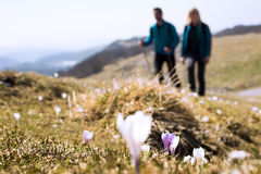 Foreground flowers with hikers walking in the background. Foreground flowers with hikers walking in the mountain stock photo