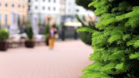 In the foreground in the focus of the tree in the wind on the street, Park. Rest and walk people. In the background stock footage