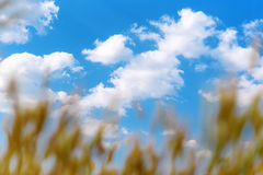 foreground grass field blue sky and sun Royalty Free Stock Photos
