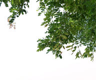 Foreground of lush trees isolated on white background Stock Images