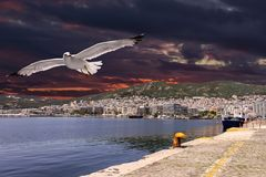 Foreground seagull and dramatic sky over Kavala, Greece royalty free stock images