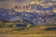 Foreground Wyoming Wildflowers and Sawtooth Mountains Royalty Free Stock Photos