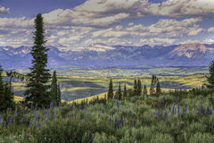 Foreground Wyoming Wildflowers and Sawtooth Mountains. Foreground Wyoming Wildflowers with Sawtooth Mountains in the Background stock photos