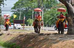 Foreigner traveller riding Thai Elephants tour in Ayutthaya Thailand. As a UNESCO World Heritage City, Ayutthaya is mostly about exploring the ruin sites and Stock Images