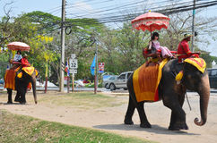 Foreigner traveller riding Thai Elephants tour in Ayutthaya Thailand. As a UNESCO World Heritage City, Ayutthaya is mostly about exploring the ruin sites and Stock Photo