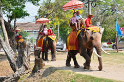 Foreigner traveller riding Thai Elephants tour in Ayutthaya Thailand. As a UNESCO World Heritage City, Ayutthaya is mostly about exploring the ruin sites and Stock Photography