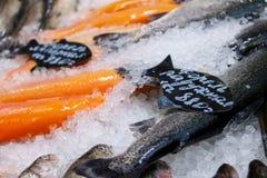 forel Verse vissen op ijs Stock Foto's