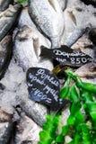 forel Verse vissen op ijs Stock Afbeelding