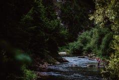 Forel-vist in bergrivier in de de zomertijd royalty-vrije stock fotografie