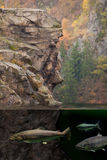Forelle in den Bergseen Stockfoto