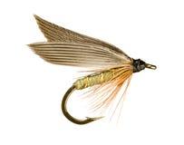 Forelle-Fischen-Fliege Stockfotos
