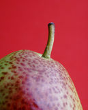 Forelle Pear against red background. With focus on stem Stock Image