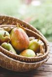 Forelle Pears Royaltyfria Foton