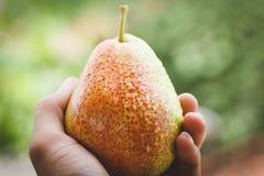 Forelle Pears Arkivbild