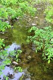 Forellen-Fluss-Strom, Franklin County, Malone, New York, Vereinigte Staaten stockfoto