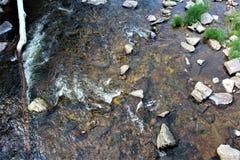 Forellen-Fluss-Strom, Franklin County, Malone, New York, Vereinigte Staaten lizenzfreies stockfoto
