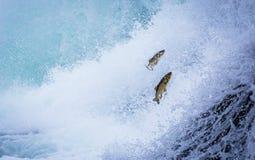 Forellen stroomopwaarts tegen de stroom stock foto