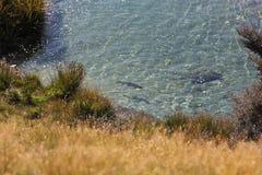Forellenfischen Stockfotos