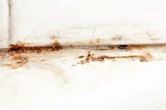 Foremka grzyb i rdzy dorośnięcie w płytek złączach w wilgotnej biednie przedyskutowanej łazience z wysoką wilgotnością, wtness, w zdjęcia royalty free