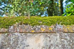 Foremka i grzyby na tynku ściana fotografia royalty free