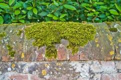 Foremka i grzyby na tynku ściana obrazy royalty free