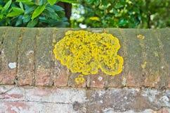 Foremka i grzyby na tynku ściana zdjęcie stock