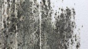 Foremka na białej ścianie zbiory wideo