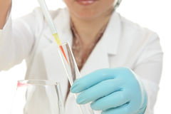 Forensic Scientist at work. A female forensic scientist at work Royalty Free Stock Image