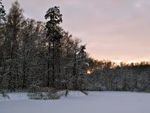 Forerst do inverno imagem de stock royalty free