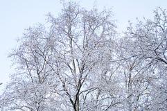 fores水平的冬天 库存照片