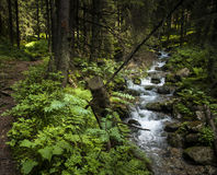 Fores, creek Royalty Free Stock Photo