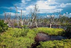 Fores d'inondation image libre de droits