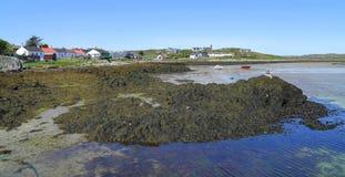 Foreshore da alga no porto da ilha fotografia de stock royalty free