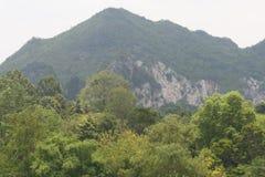 Foresn y montañas tropicales Foto de archivo