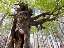 Forest's拖钓 免版税库存照片