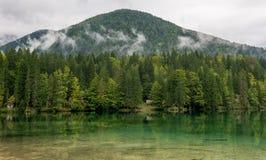 Forest湖全景 免版税库存照片