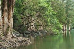 Forest湖反射的结构树 免版税库存图片
