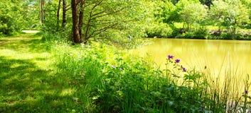 Forest湖和绿色树 免版税库存照片