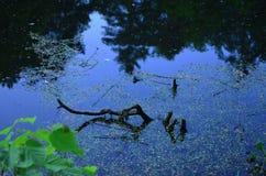 Forest湖在一个夏天晚上 免版税库存照片