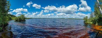 Forest湖在一个热的夏日 免版税库存图片