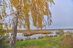 Forest湖在中央俄罗斯 库存图片