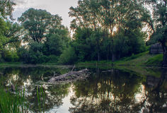 Forest湖在夏天在黎明 免版税库存图片